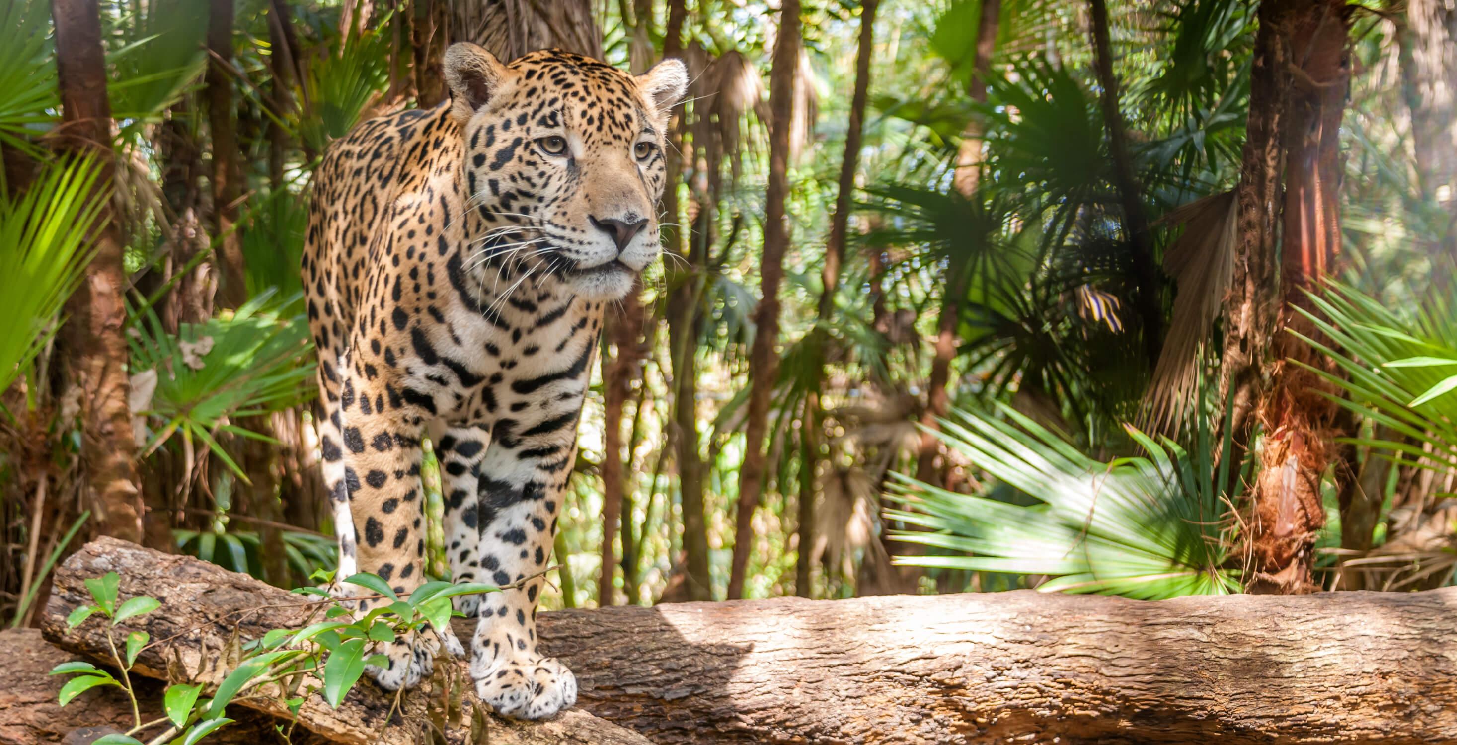 Blog Hero - Jaguar (1)